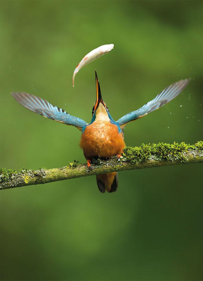 Captura Del Día Por Vince Burton, Reino Unido. Ganador En La Categoría Fotografía De Naturaleza Ltda. Elección Del Público