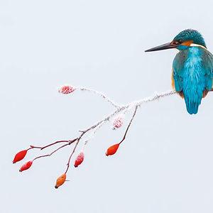 Portada Mejor Fotógrafo De Aves Del Año 2017