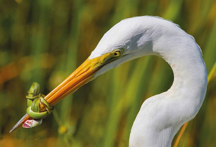 Las mejores 10+ Fotos De Aves De 2017 Han Sido Anunciadas, Y Son Verdaderamente Asombrosas