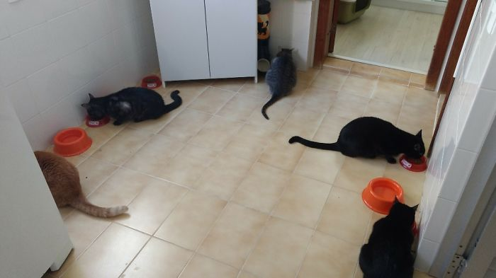 Lunch Time! Another 3 More Cats Are Not In The Pic.
