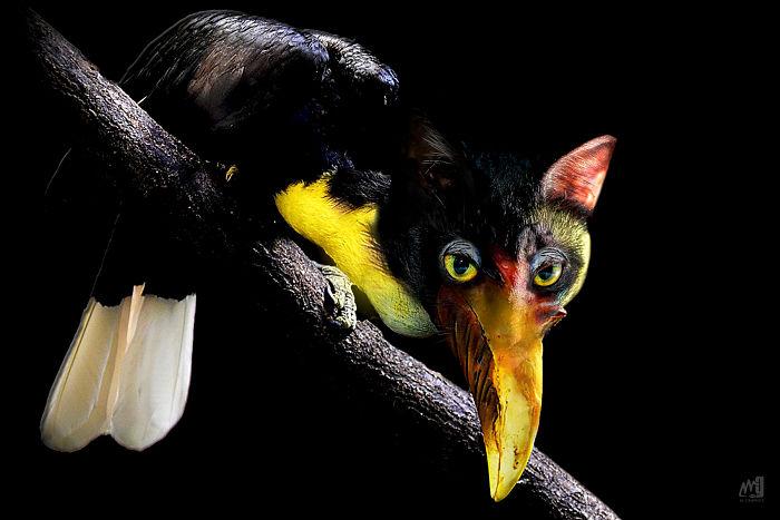 Wrinkled Hornbill | M.graphics