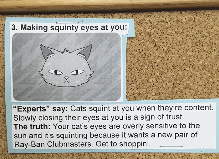 Cat Behaviours And What They Actually Mean Junk Host - 15 hilarious animals whod do anything for your food
