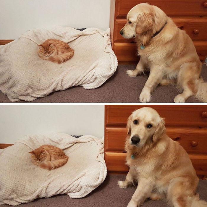 El gato acaba de descubrir la cama del perro