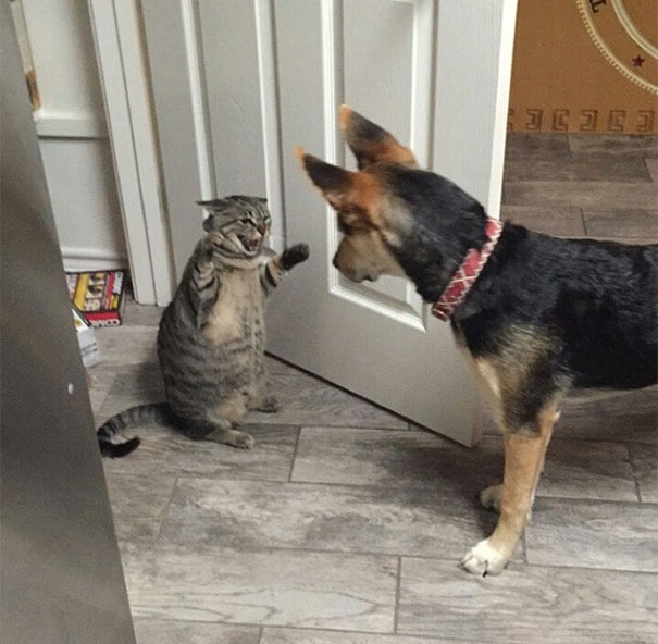 123 Times Owners Wanted Cats And Dogs To Live Together