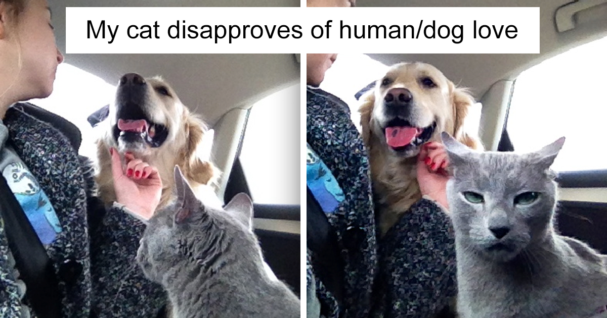 75+ Hilarious Pics Of Cats And Dogs Living Together