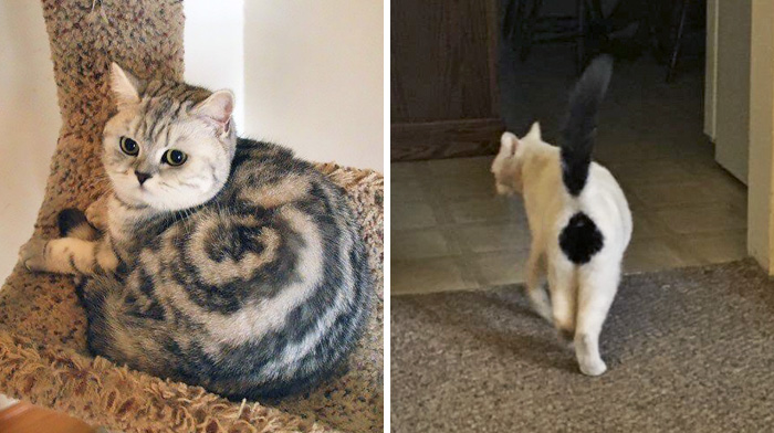 50 Cats With The Craziest Fur Markings