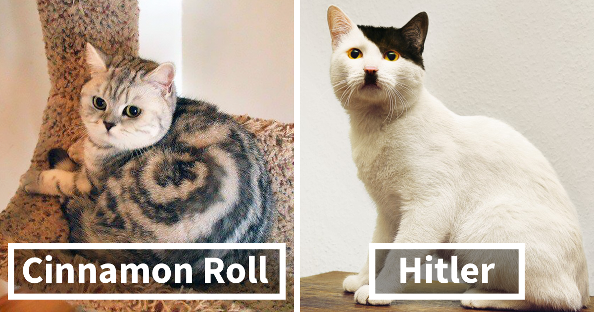 40 Cats With The Craziest Fur Markings Ever Bored Panda Simple Cat Fur Patterns