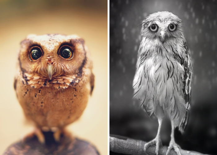 Photographer Captures The Hypnotising Beauty Of Owls In 10+ Striking Portraits