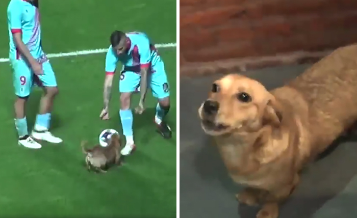 Random Dog Interrupts Soccer Match In Argentina, And Wins The Hearts Of Fans