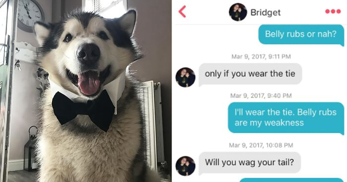 Guy Makes His Malamute A Tinder Profile And The Conversations Are Hilarious Bored Panda 3 giant alaskan malamutes also known as big teddy bears and a maine coon cat called milo. guy makes his malamute a tinder profile