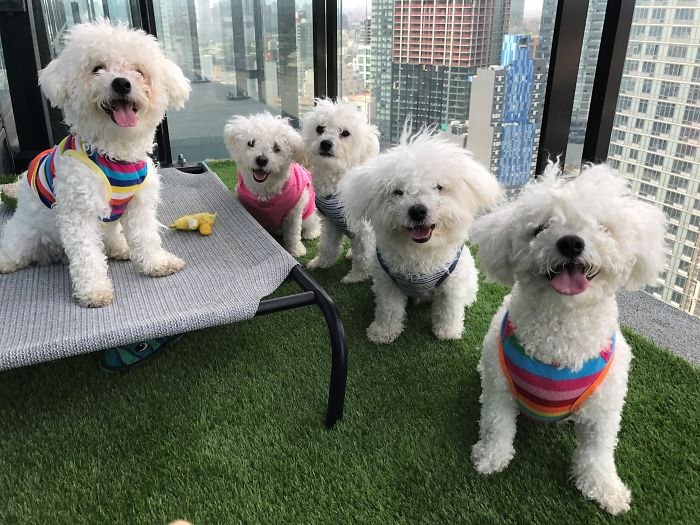 The Crew [left To Right: Mochi, Mom- Lina, Mander, Kirby, And Dad- Gon]