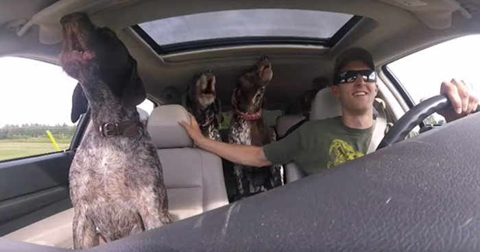 Pack Of Dogs Freak Out When They Realize Where Their Human Is Driving Them