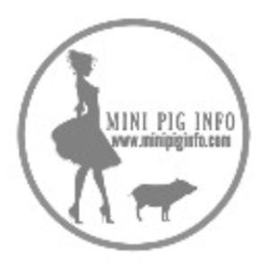 Mini Pig Info