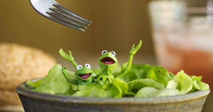 I Photograph Kermit The Frog Having Crazy Adventures