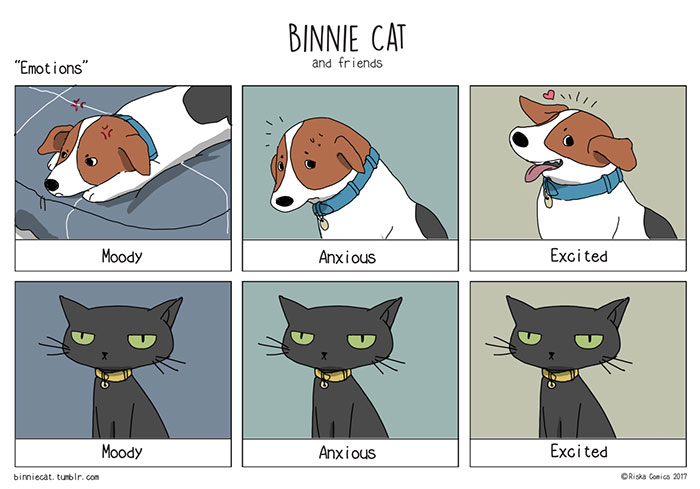 Funny Cats Vs Dogs Comics