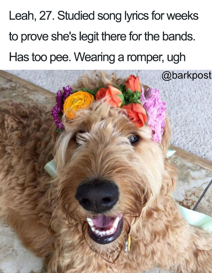 63 Dog Bios That Will Hilariously Remind You Of Somebody You Know Bored Panda
