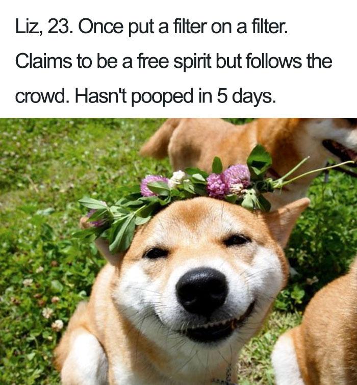 Funny-dog-bios