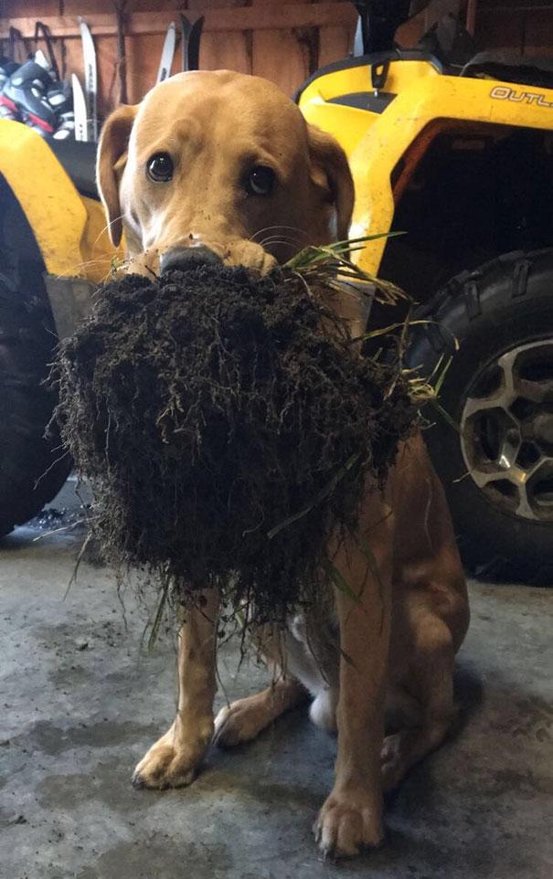 Il mio cane mi ha portato qualche sporca oggi