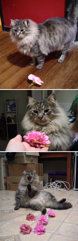 Mr. Slash caza flores y me trae una cada noche, pero no destroza el jardín