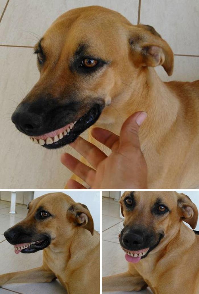 Ha encontrado una dentadura postiza y casi me muero de risa