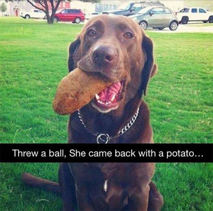 Le tiré una pelota y volvió con una patata