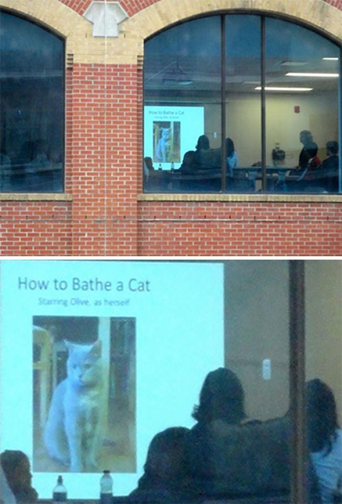 """Importante reunión sobre """"Cómo bañar a un gato"""""""