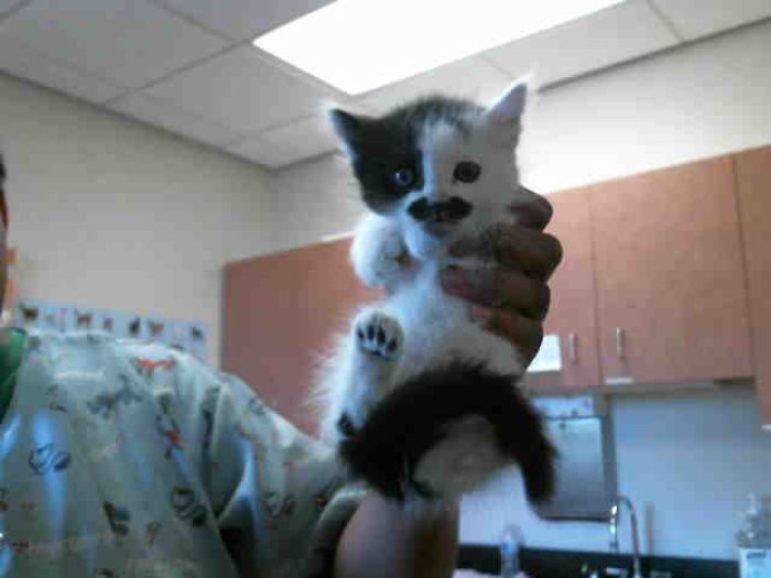 Some Thief Adopted This Adorable Kitten From The Shelter 5 Minutes Before I Got There!