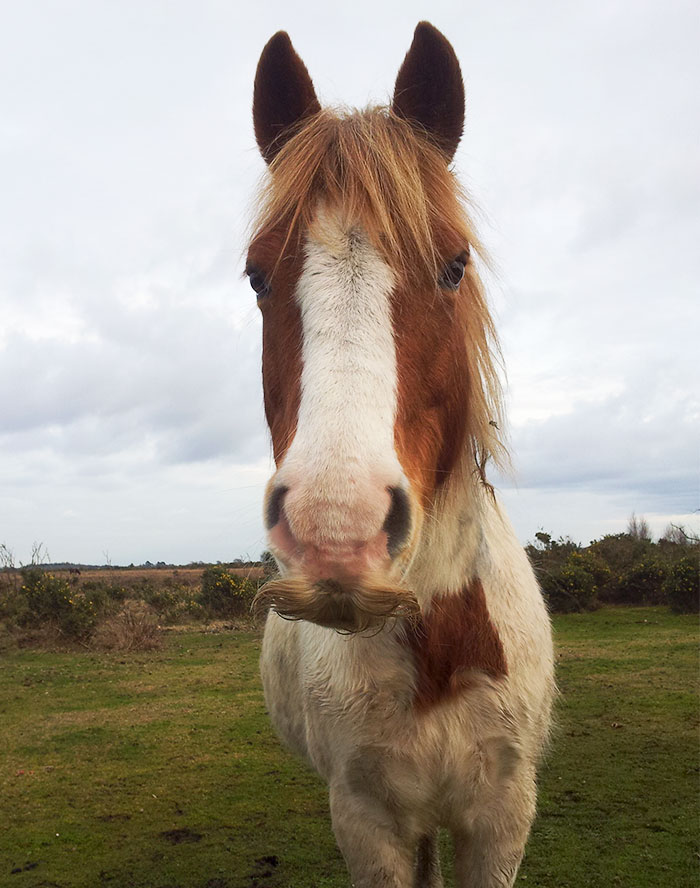 Horse With A Real Moustache