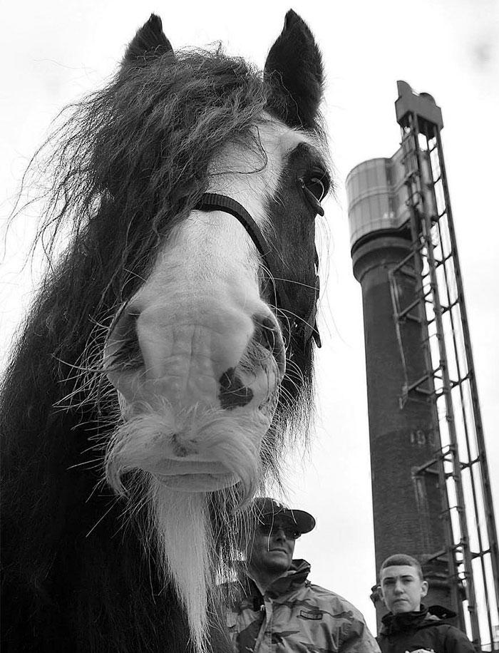 This Horse Has Stylish Facial Hair