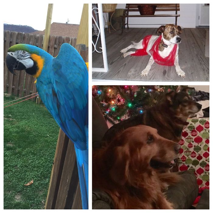 Lady Gwendolyn (b&g Macaw), Jesse(boxer/pit, Deceased) & Jack And Gypsy(golden And Unknown)