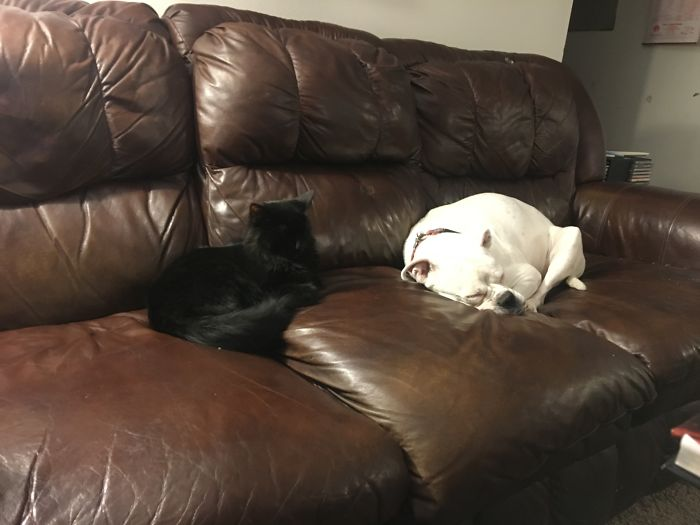 Kleo The Dog And Havoc The Cat Stealing Our Spots On The Couch. Best Buds And Partners In Crime!