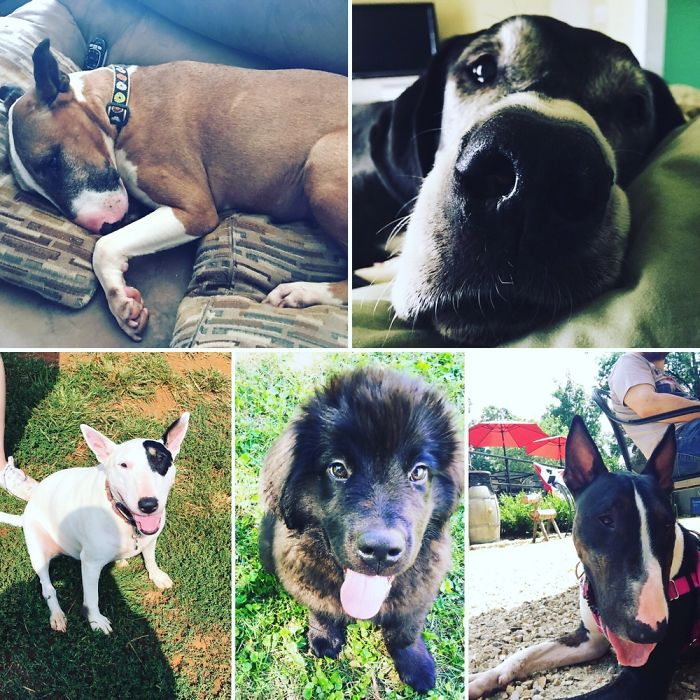 Top Left To Bottom Right: Brutus, Mazi, Aeris, Grover And Foster Dog, Marvel. Plus Two Cats!