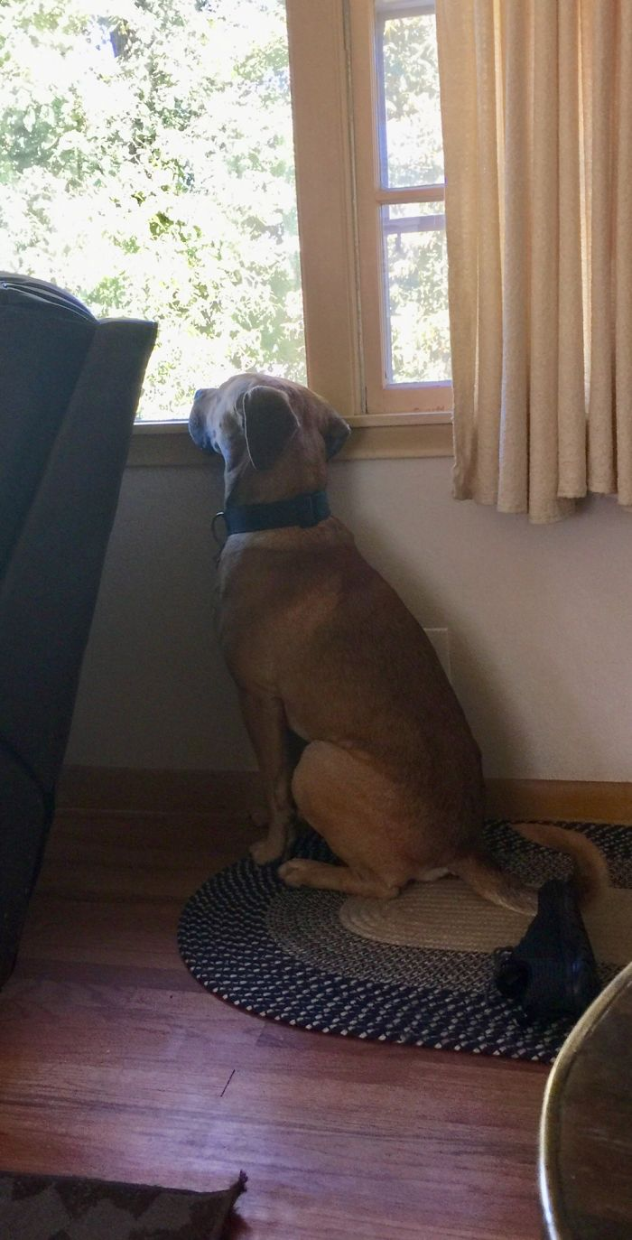 Waiting For His Best Friends..