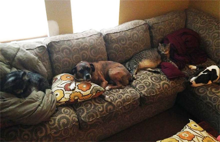 My Pets Have Taken Over My Couch