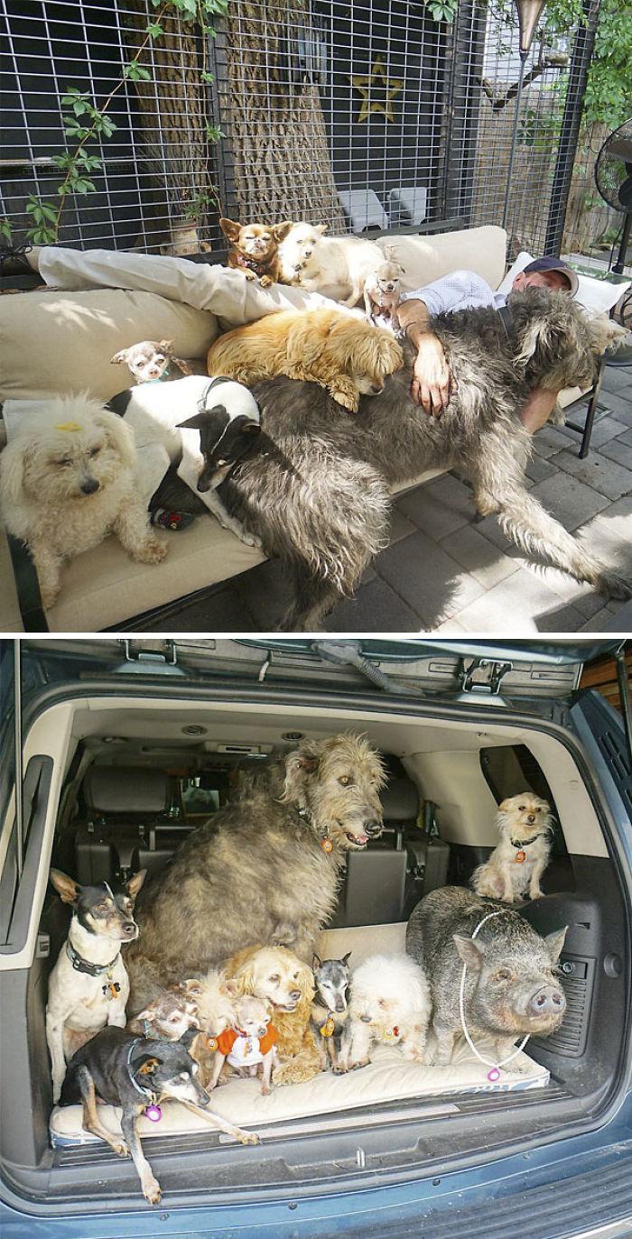 Steve vive con perros ancianos rescatados, un cerdo, un conejo y otros animales
