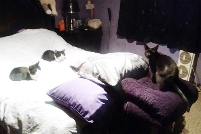 He interrumpido la reunión de mis gatos