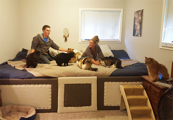 Girlfriend And I Have 5 Cats And 2 Dogs That All Love To Sleep With Us At Night... Solution? We Made An 11ft King + Full Mega Bed!