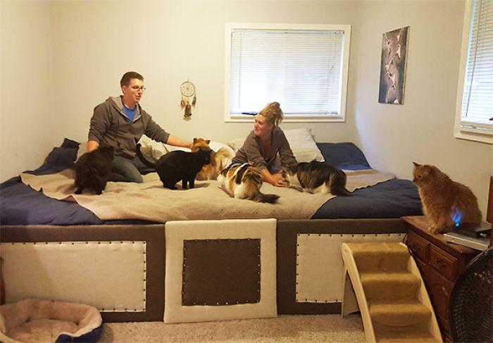 Hicimos una cama gigante para dormir con nuestros 5 gatos y 2 perros