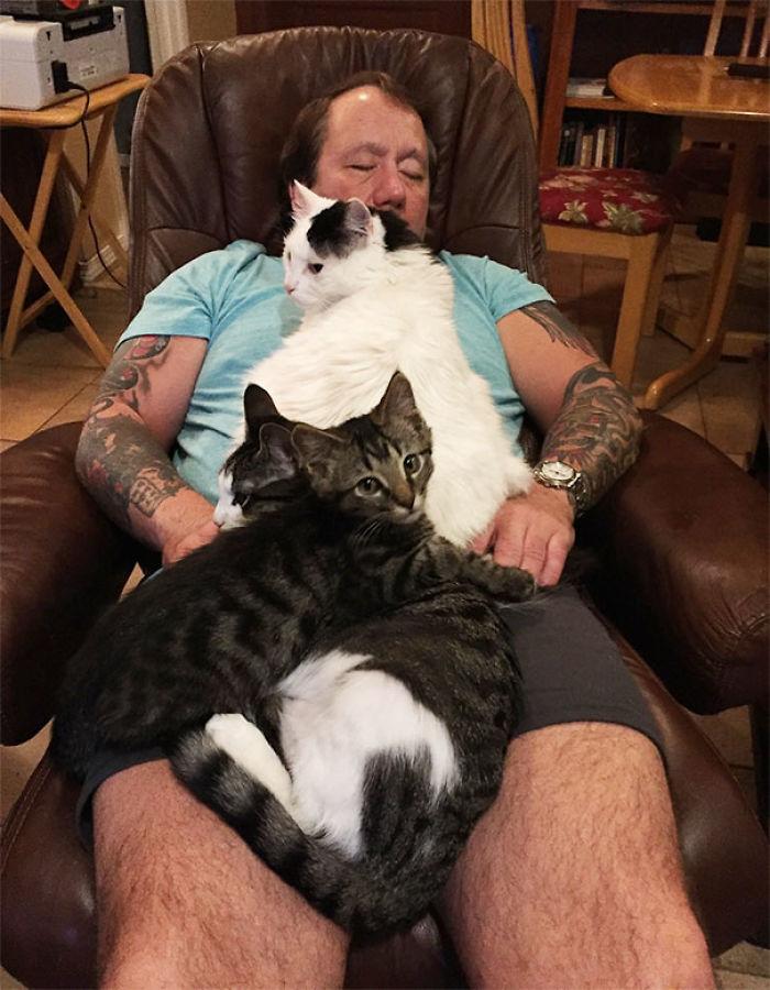 100% de relax con gatos