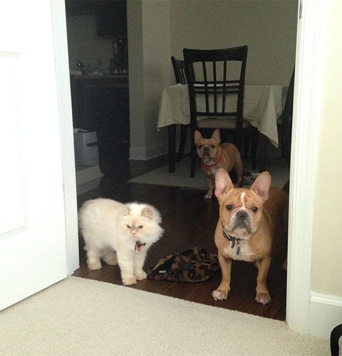 Hemos entrenado a las mascotas para que no entren al dormitorio