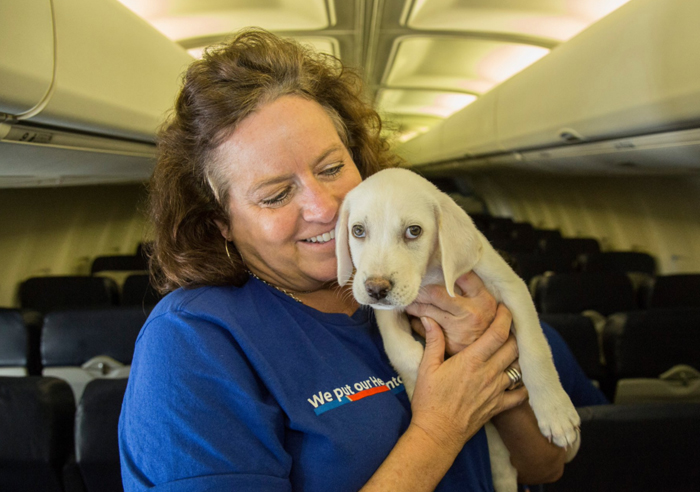 暴雨后,救助站里的流浪动物爆满,航空公司提供援助之手