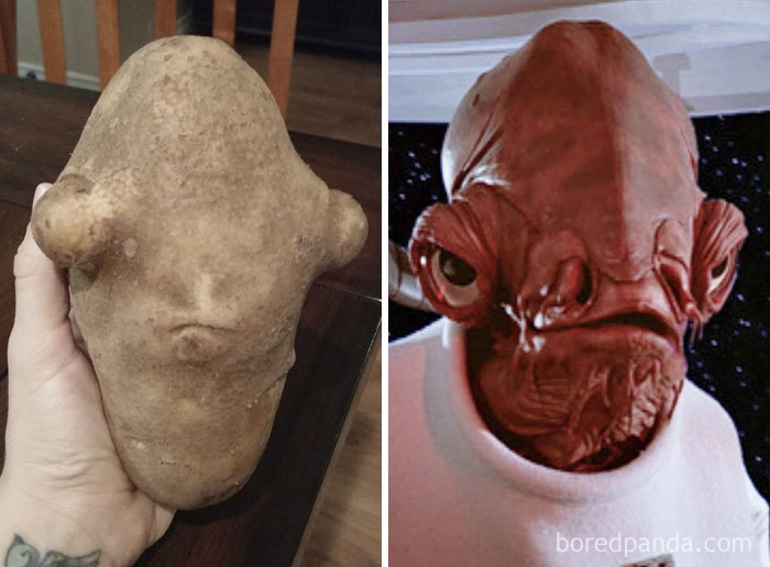 My Wife's Potato Looks Like Admiral Ackbar