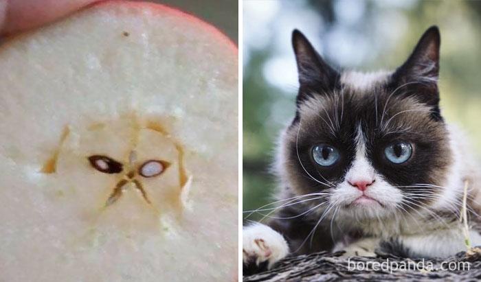 Manzana que parece Grumpy Cat
