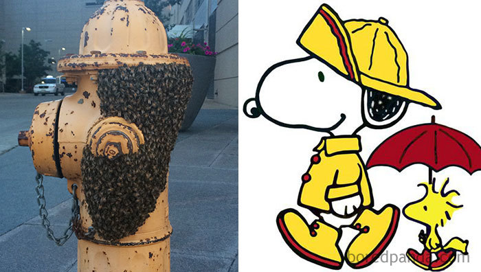 Swarm Of Bees On Hydrant Looks Like Snoopy Wearing A Hat