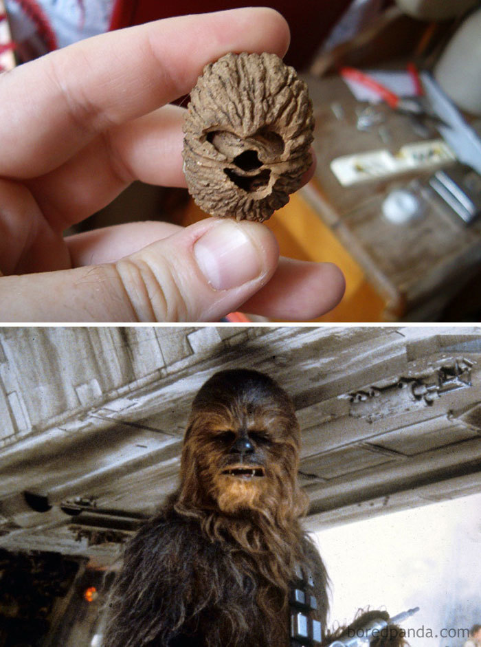 This Walnut Look Like Chewbacca