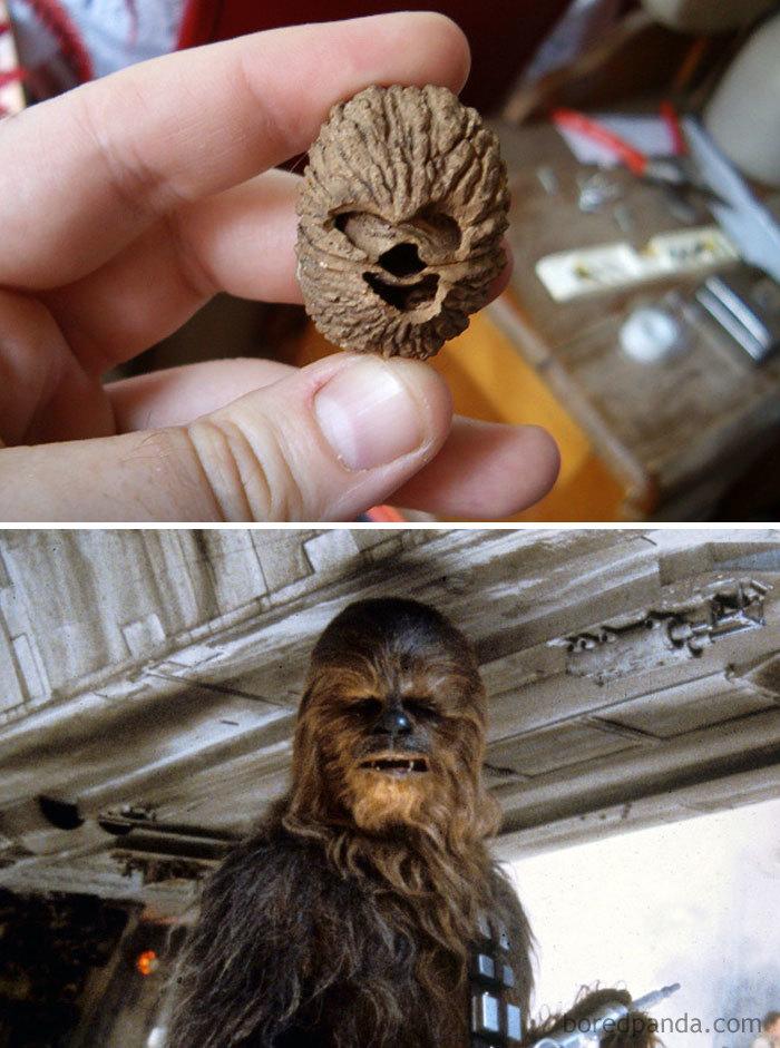 This Walnut Look Like Chewbacca