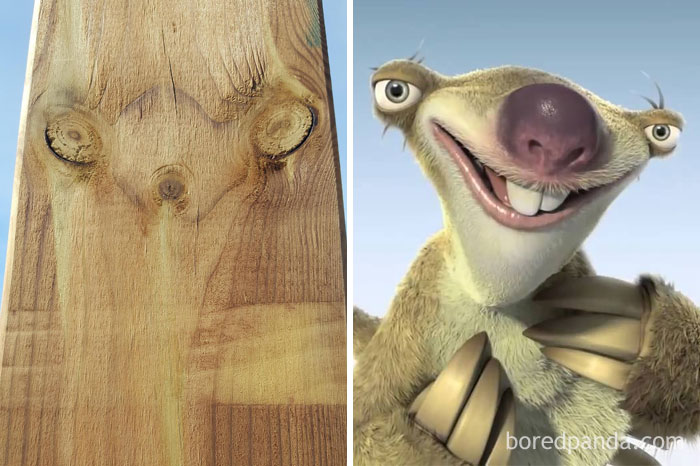 This Looks Like Sid The Sloth