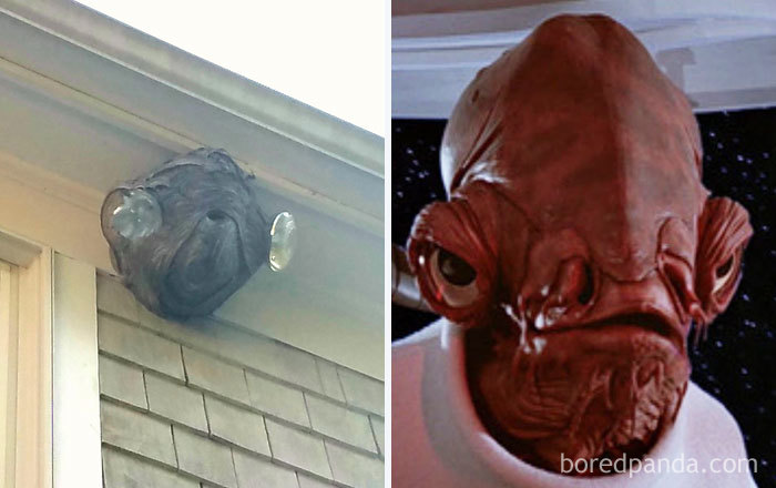 This Hornets Nest Near The Roof Looks Like Admiral Ackbar