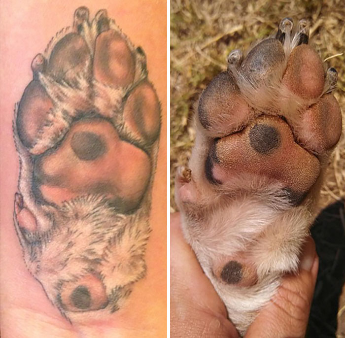 dog paw prints make the most pawesome tattoos ever and here s the rh boredpanda com dog paw print tattoo dog paw print tattoo transfers