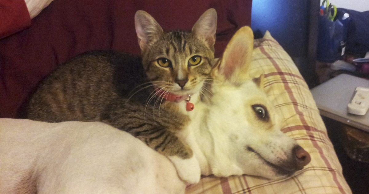 Post Pictures Of Cats And Dogs Living Together